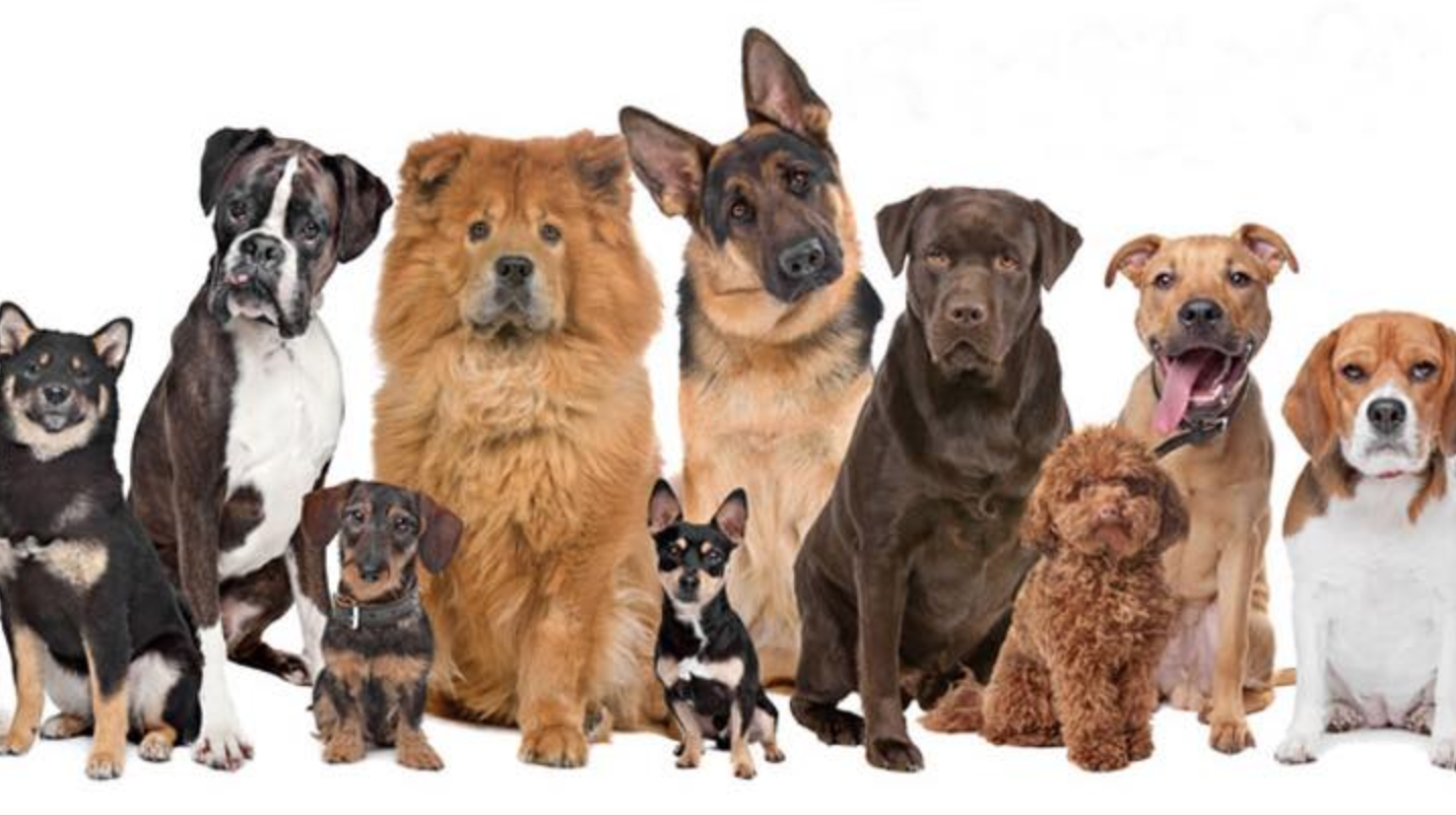 Range of dogs for the Hillside Brewery Dog Show